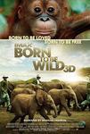 Plakat filmu Dzikie z natury